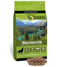 Wildborn Blackwoods dzik,...