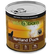 Wildborn Wetland Duck dzika...